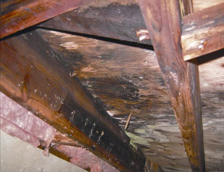 mold and rot in a Olean crawl space