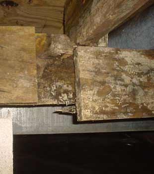Home Mold & Dust Mite Problems Company in Warren, Olean, Du