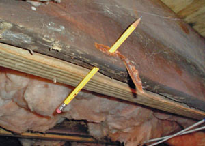 Destroyed crawl space structural wood in Coudersport