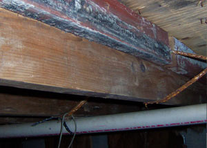 Rotting, decaying wood from mold damage in Franklinville